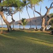 Beach Park Lawn Trees