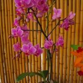 Orchids in Breezeway