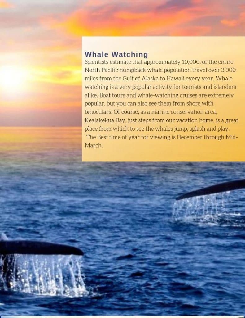 image cover dolphin bay travel guide